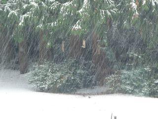 Snow112210